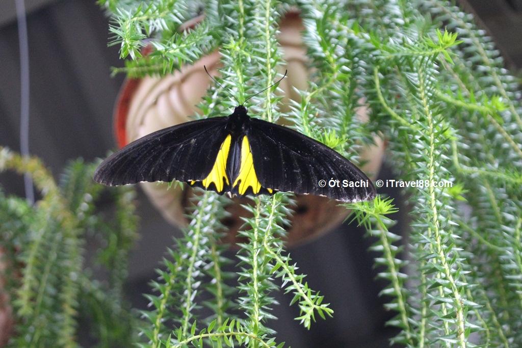 Butterfly farm ở Penang, kinh nghiệm du lịch tự túc Malaysia từ A-Z