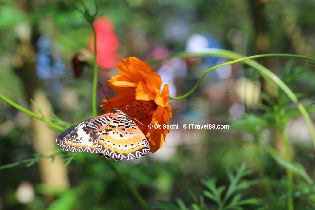 Butterfly farm - thiên đường của các loài bướm