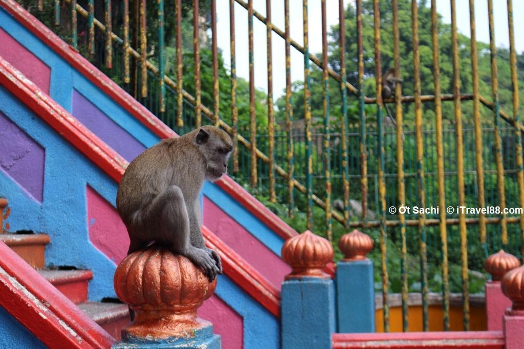 Hãy để mắt tới các chú khỉ ở động Batu